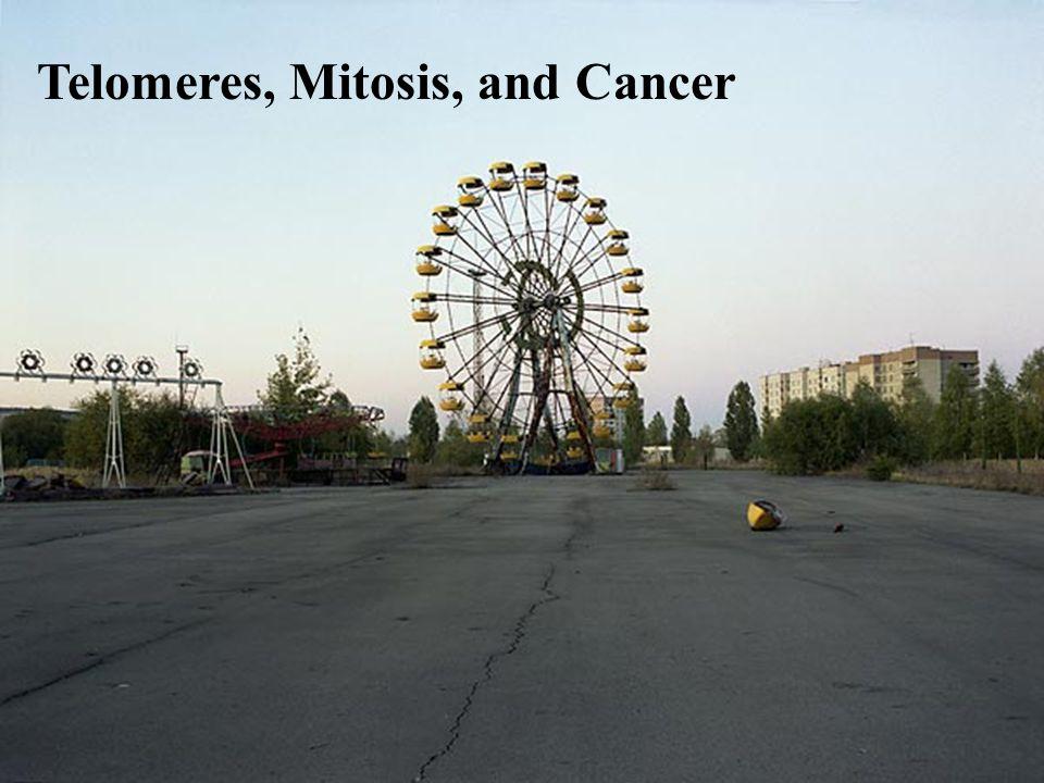 Telomeres, Mitosis, and Cancer