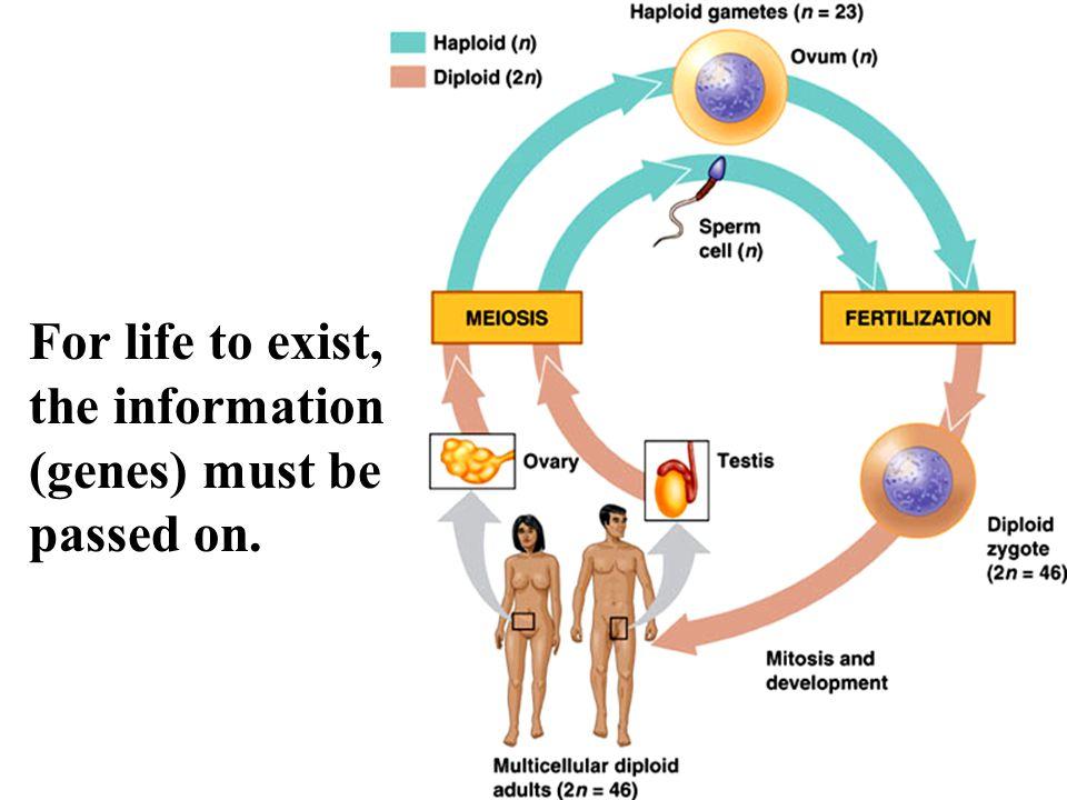 Benign versus Malignant cancer