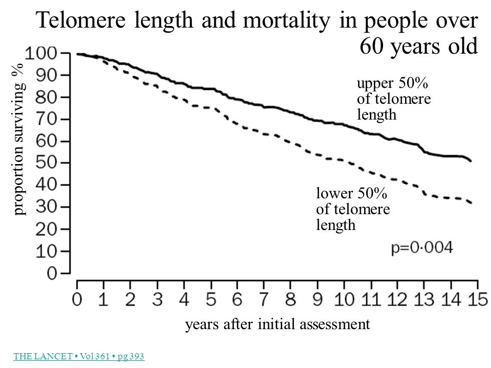 THE LANCET Vol 361 pg 393 Telomere length and mortality in people over 60 years old upper 50% of telomere length lower 50% of telomere length proportion surviving % years after initial assessment