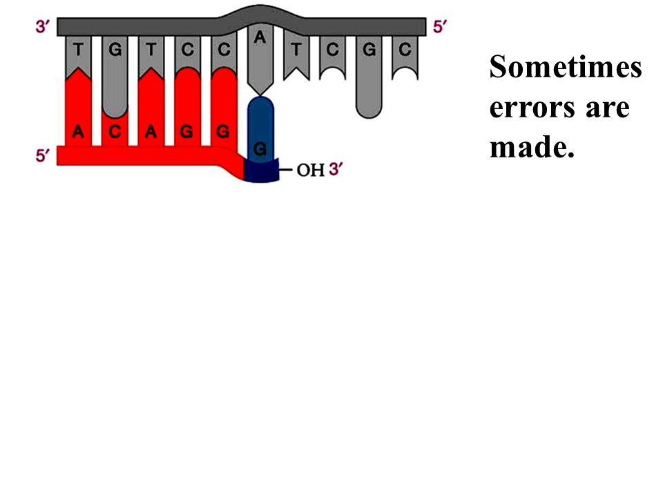 Luckily, errors can be repaired. As they occur by DNA polymerase Error