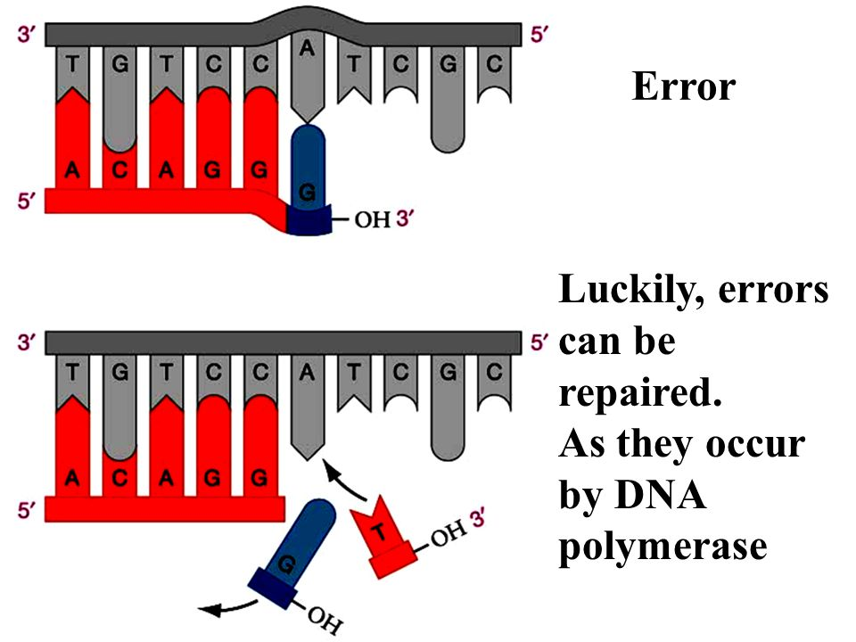 Not all errors get repaired. These are mutations.