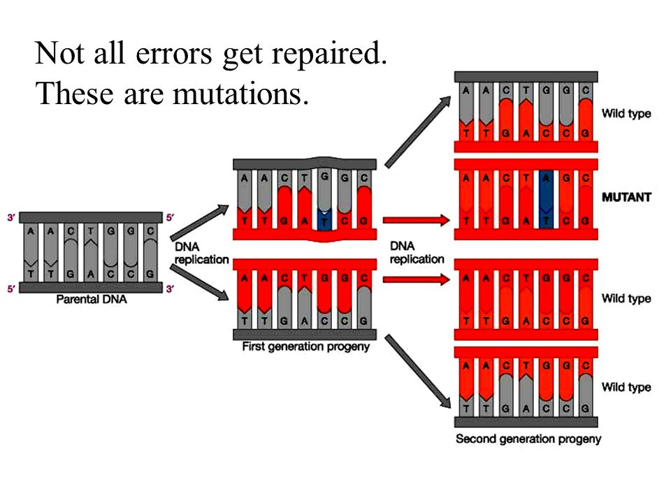 Causes of mutations: Replication errors –Exacerbated by poor DNA repair –Limited by telomere length Other biological agents –Viruses –Transposons Environmental factors –Ultraviolet light –Mutagenic chemicals smoking, industrial waste, natural toxins