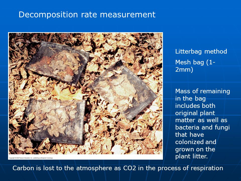 Decomposition rate measurement Litterbag method Mesh bag (1- 2mm) Mass of remaining in the bag includes both original plant matter as well as bacteria