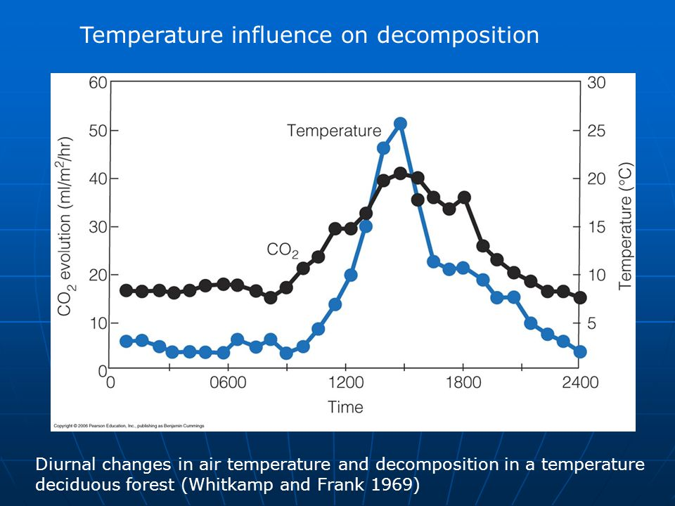 Temperature influence on decomposition Diurnal changes in air temperature and decomposition in a temperature deciduous forest (Whitkamp and Frank 1969)