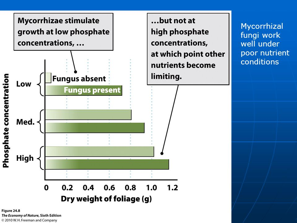 Mycorrhizal fungi work well under poor nutrient conditions