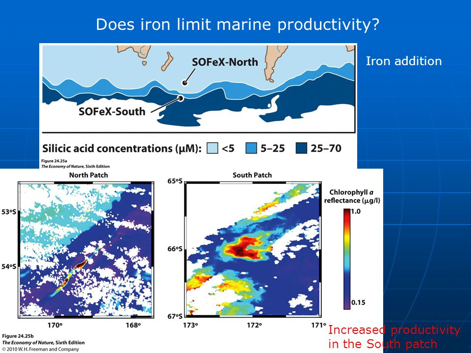 Does iron limit marine productivity Iron addition Increased productivity in the South patch