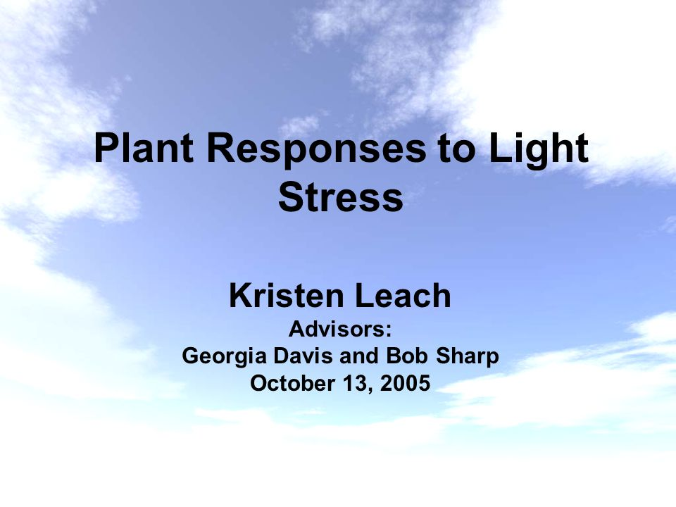 Plant Responses to Light Stress Kristen Leach Advisors: Georgia Davis and Bob Sharp October 13, 2005