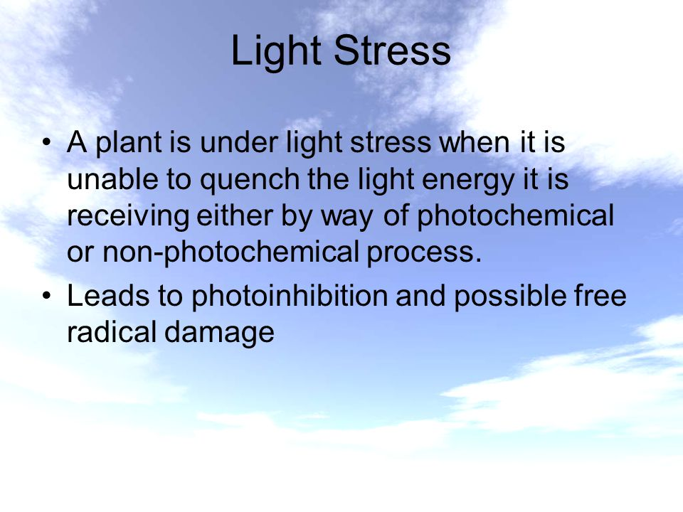 Light Stress A plant is under light stress when it is unable to quench the light energy it is receiving either by way of photochemical or non-photoche