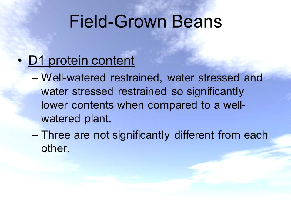 Field-Grown Beans D1 protein content –Well-watered restrained, water stressed and water stressed restrained so significantly lower contents when compa