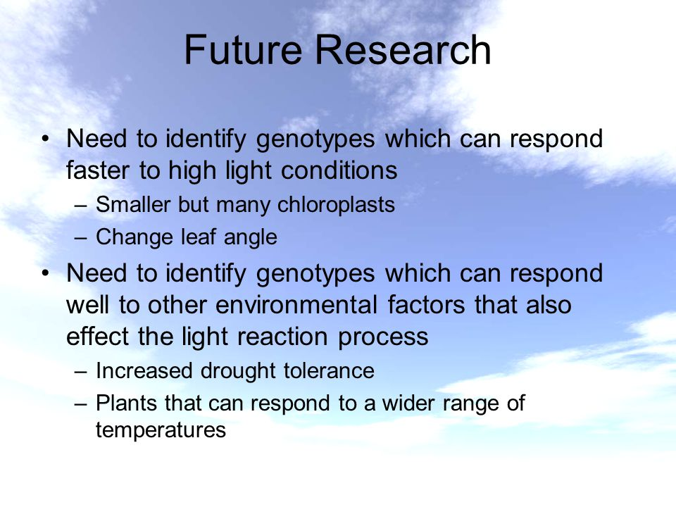Future Research Need to identify genotypes which can respond faster to high light conditions –Smaller but many chloroplasts –Change leaf angle Need to