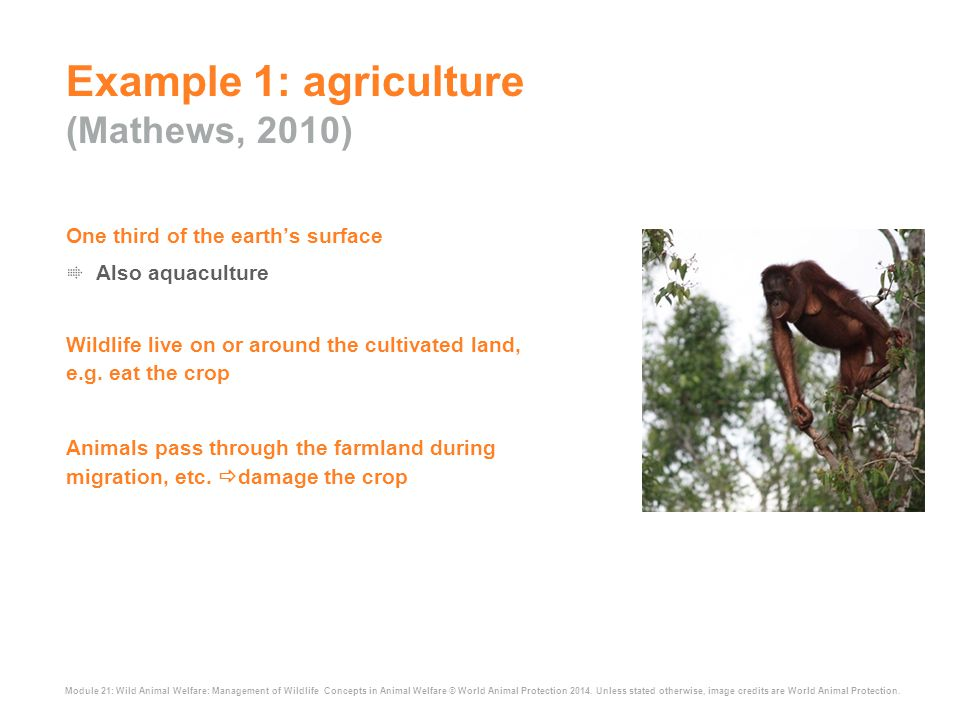 Module 21: Wild Animal Welfare: Management of Wildlife Concepts in Animal Welfare © World Animal Protection 2014. Unless stated otherwise, image credi