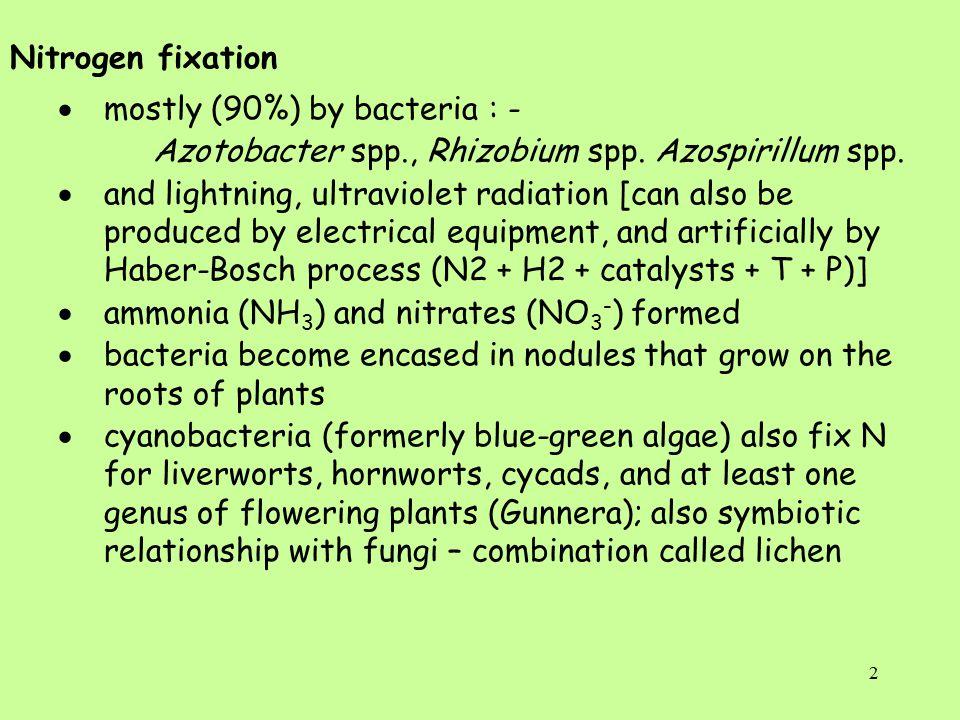 2 Nitrogen fixation  mostly (90%) by bacteria : - Azotobacter spp., Rhizobium spp.