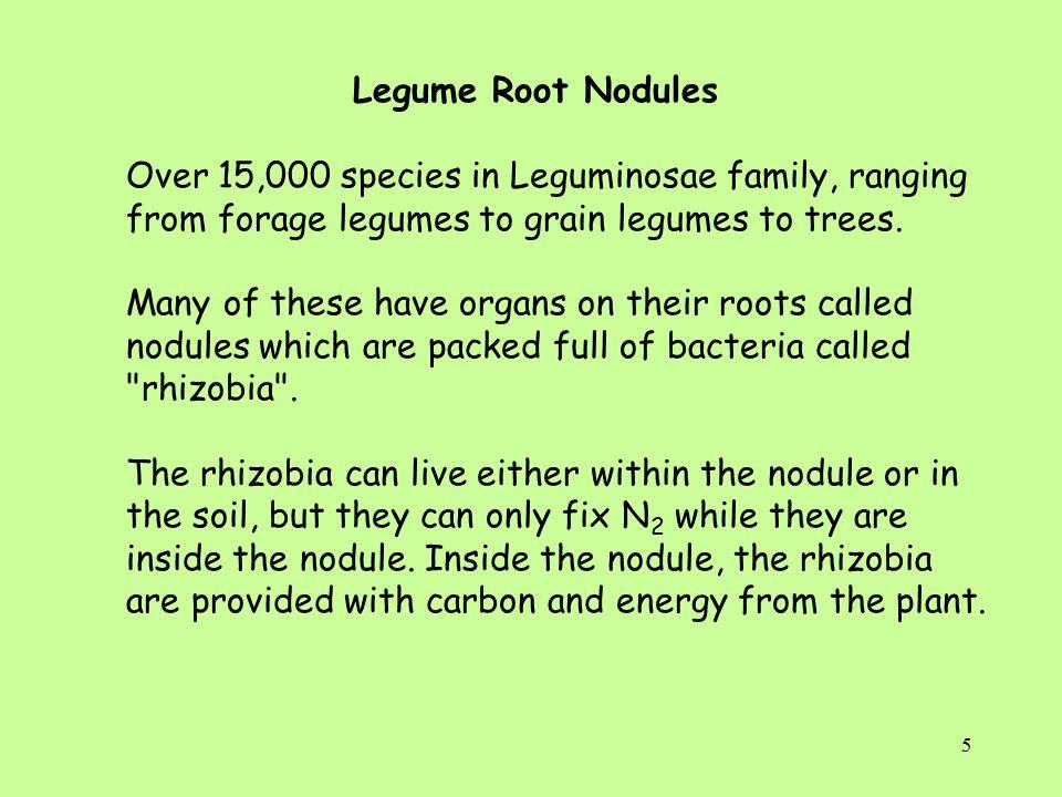 6 Nodules on root