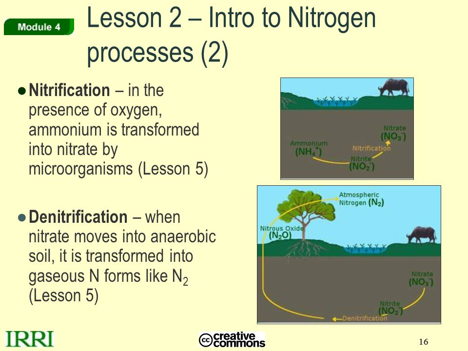 16 ● Nitrification – in the presence of oxygen, ammonium is transformed into nitrate by microorganisms (Lesson 5) ● Denitrification – when nitrate mov