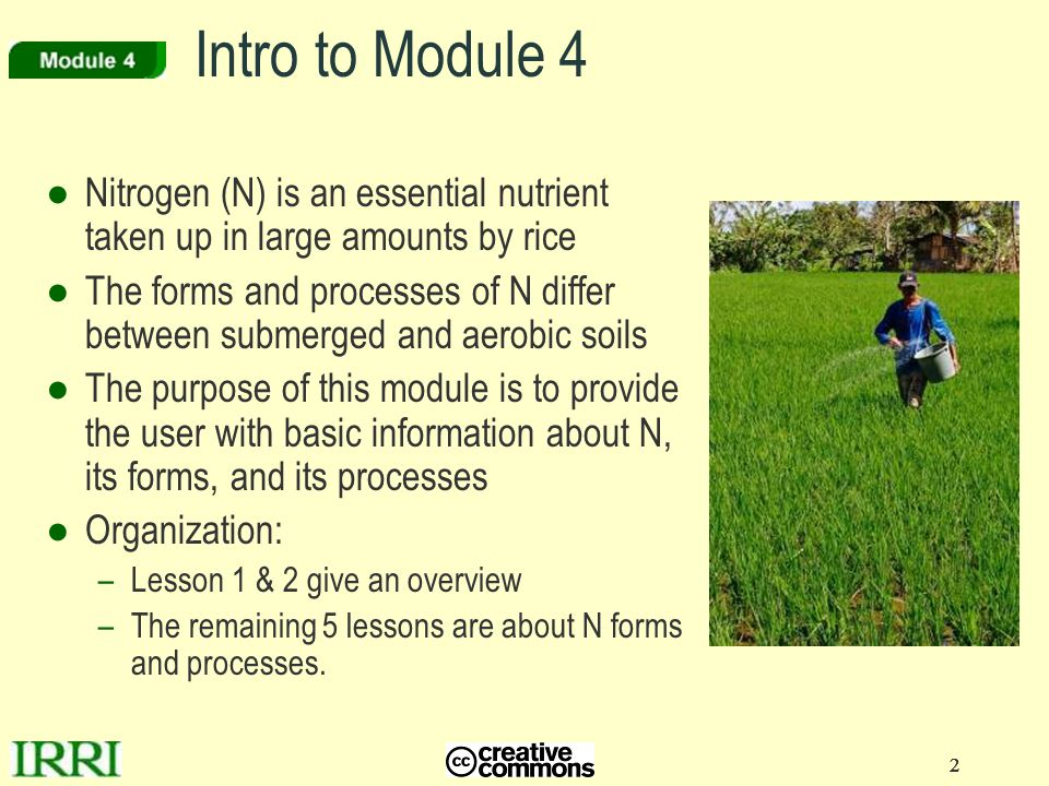 2 22 Intro to Module 4 ●Nitrogen (N) is an essential nutrient taken up in large amounts by rice ●The forms and processes of N differ between submerged