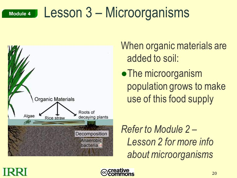 20 Lesson 3 – Microorganisms When organic materials are added to soil: ●The microorganism population grows to make use of this food supply Refer to Mo
