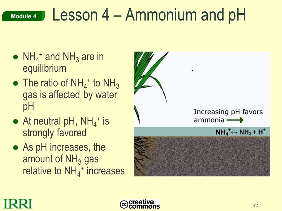 32 Lesson 4 – Ammonium and pH ●NH 4 + and NH 3 are in equilibrium ●The ratio of NH 4 + to NH 3 gas is affected by water pH ●At neutral pH, NH 4 + is strongly favored ●As pH increases, the amount of NH 3 gas relative to NH 4 + increases 32