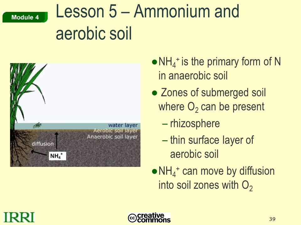 39 Lesson 5 – Ammonium and aerobic soil ●NH 4 + is the primary form of N in anaerobic soil ● Zones of submerged soil where O 2 can be present –rhizosp