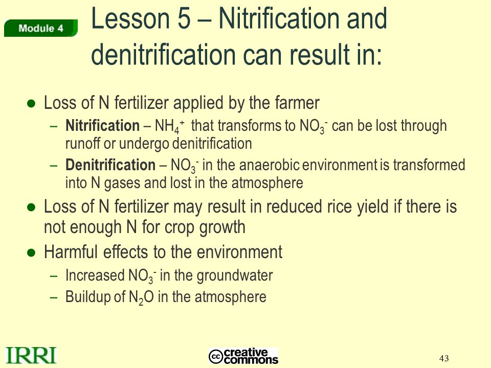 43 Lesson 5 – Nitrification and denitrification can result in: ●Loss of N fertilizer applied by the farmer – Nitrification – NH 4 + that transforms to NO 3 - can be lost through runoff or undergo denitrification – Denitrification – NO 3 - in the anaerobic environment is transformed into N gases and lost in the atmosphere ●Loss of N fertilizer may result in reduced rice yield if there is not enough N for crop growth ●Harmful effects to the environment –Increased NO 3 - in the groundwater –Buildup of N 2 O in the atmosphere