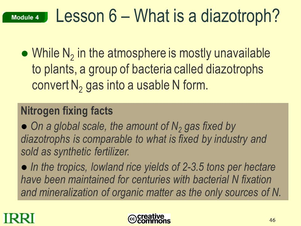 46 Lesson 6 – What is a diazotroph? ●While N 2 in the atmosphere is mostly unavailable to plants, a group of bacteria called diazotrophs convert N 2 g