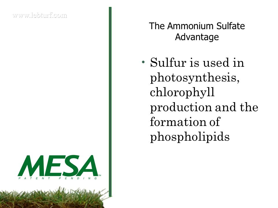 The Ammonium Sulfate Advantage Sulfur is used in photosynthesis, chlorophyll production and the formation of phospholipids