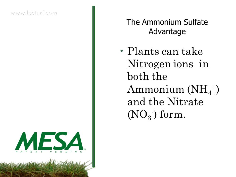 Plants can take Nitrogen ions in both the Ammonium (NH 4 + ) and the Nitrate (NO 3 - ) form.
