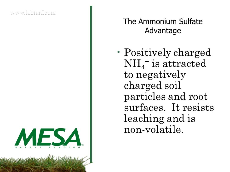 The Ammonium Sulfate Advantage Positively charged NH 4 + is attracted to negatively charged soil particles and root surfaces.