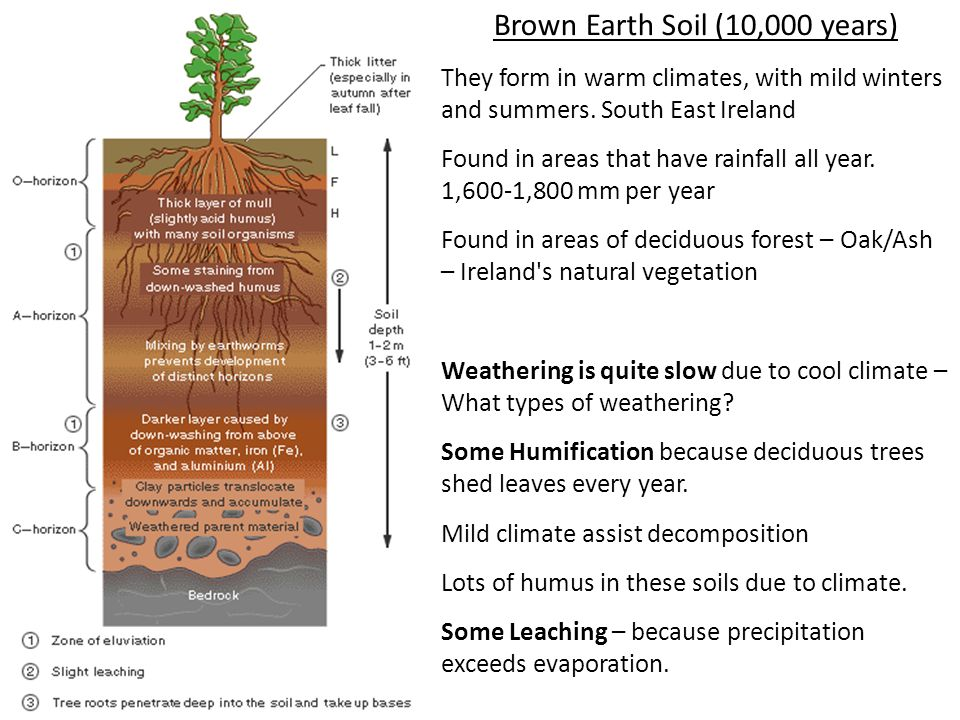 Brown Earth Soil (10,000 years) They form in warm climates, with mild winters and summers. South East Ireland Found in areas that have rainfall all ye