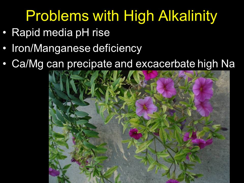 Problems with High Alkalinity Rapid media pH rise Iron/Manganese deficiency Ca/Mg can precipate and excacerbate high Na