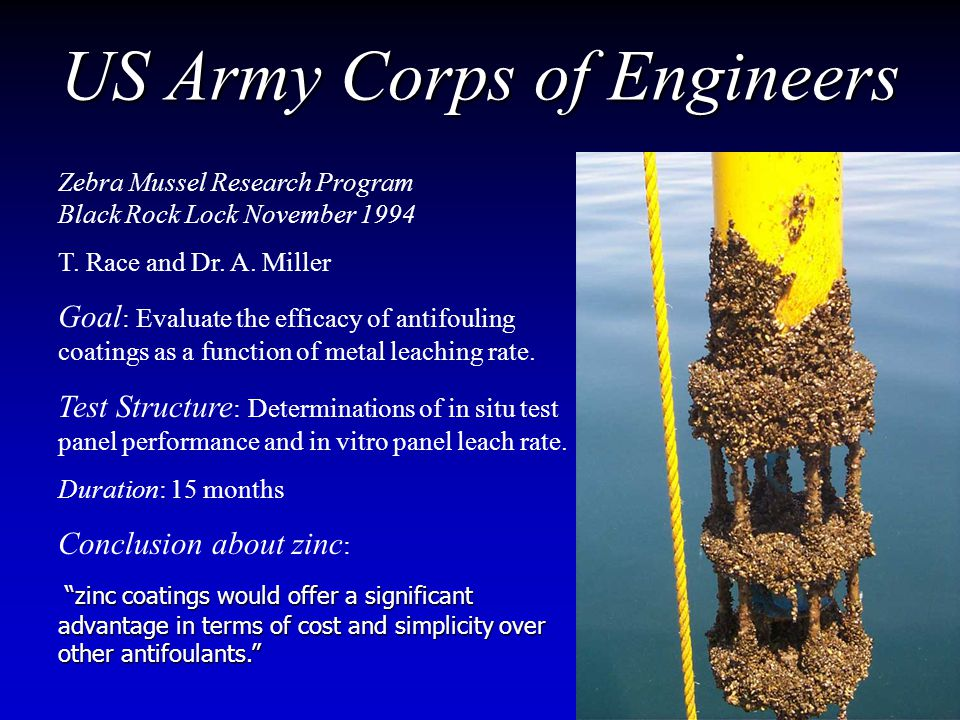 US Army Corps of Engineers Zebra Mussel Research Program Black Rock Lock November 1994 T.