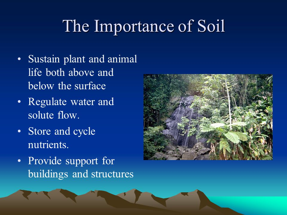 The Importance of Soil Sustain plant and animal life both above and below the surface Regulate water and solute flow. Store and cycle nutrients. Provi