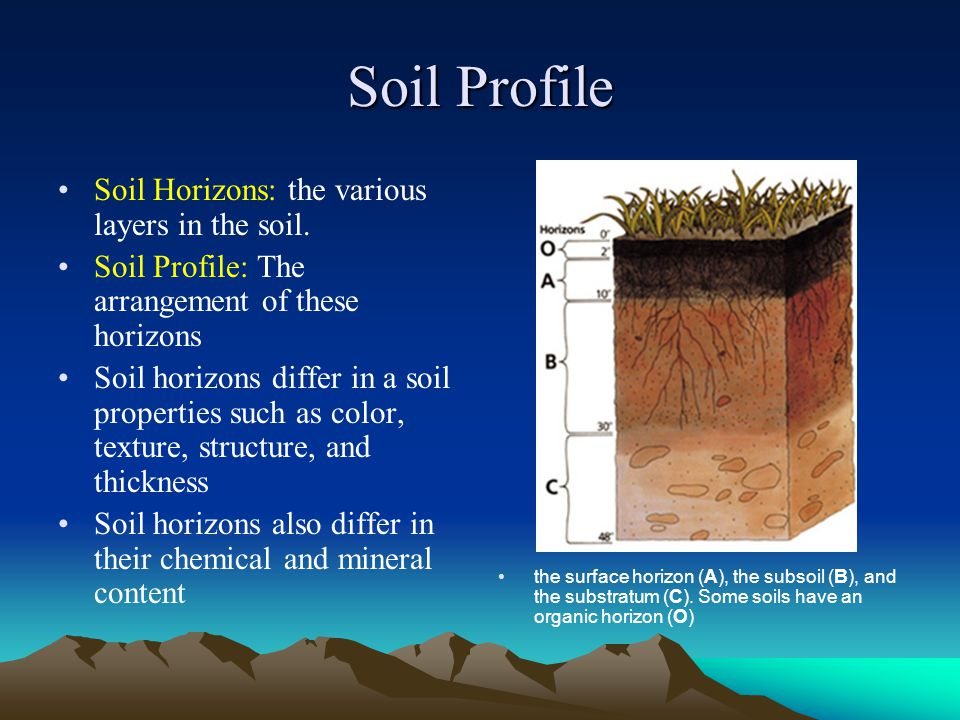 Soil Profile Soil Horizons: the various layers in the soil. Soil Profile: The arrangement of these horizons Soil horizons differ in a soil properties