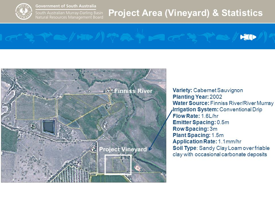 Project Area (Vineyard) & Statistics Project Vineyard Finniss River Variety: Cabernet Sauvignon Planting Year: 2002 Water Source: Finniss River/River Murray Irrigation System: Conventional Drip Flow Rate: 1.6L/hr Emitter Spacing: 0.5m Row Spacing: 3m Plant Spacing: 1.5m Application Rate: 1.1mm/hr Soil Type: Sandy Clay Loam over friable clay with occasional carbonate deposits