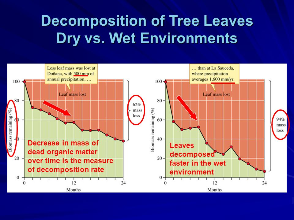 Decomposition of Tree Leaves Dry vs.