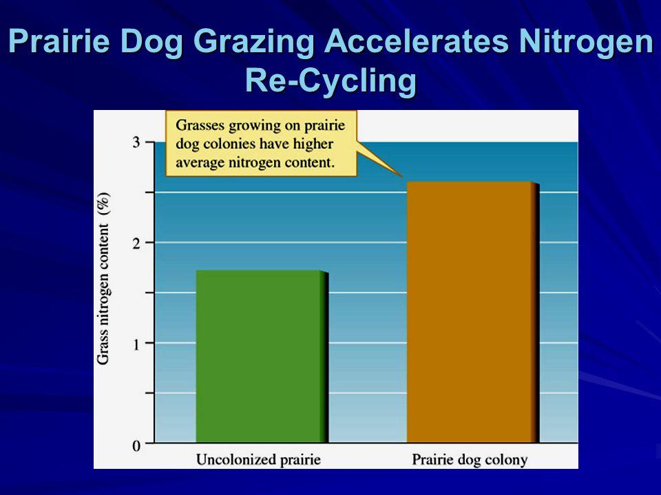 Prairie Dog Grazing Accelerates Nitrogen Re-Cycling