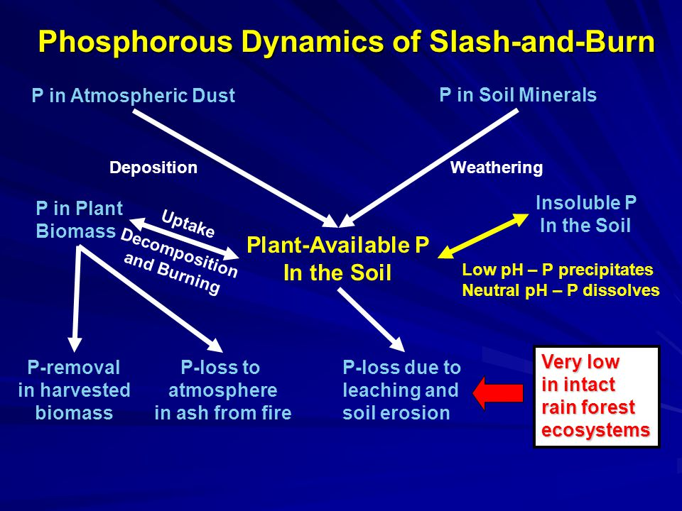 Phosphorous Dynamics of Slash-and-Burn P in Atmospheric Dust P in Soil Minerals Plant-Available P In the Soil Insoluble P In the Soil P in Plant Biomass DepositionWeathering Uptake Low pH – P precipitates Neutral pH – P dissolves Decomposition and Burning P-removal in harvested biomass P-loss to atmosphere in ash from fire P-loss due to leaching and soil erosion Very low in intact rain forest ecosystems