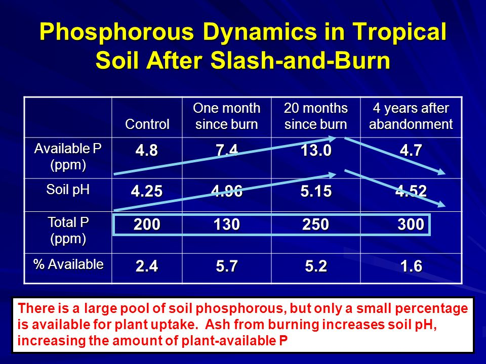 Phosphorous Dynamics in Tropical Soil After Slash-and-Burn Control One month since burn 20 months since burn 4 years after abandonment Available P (ppm) 4.87.413.04.7 Soil pH 4.254.965.154.52 Total P (ppm) 200130250300 % Available 2.45.75.21.6 There is a large pool of soil phosphorous, but only a small percentage is available for plant uptake.
