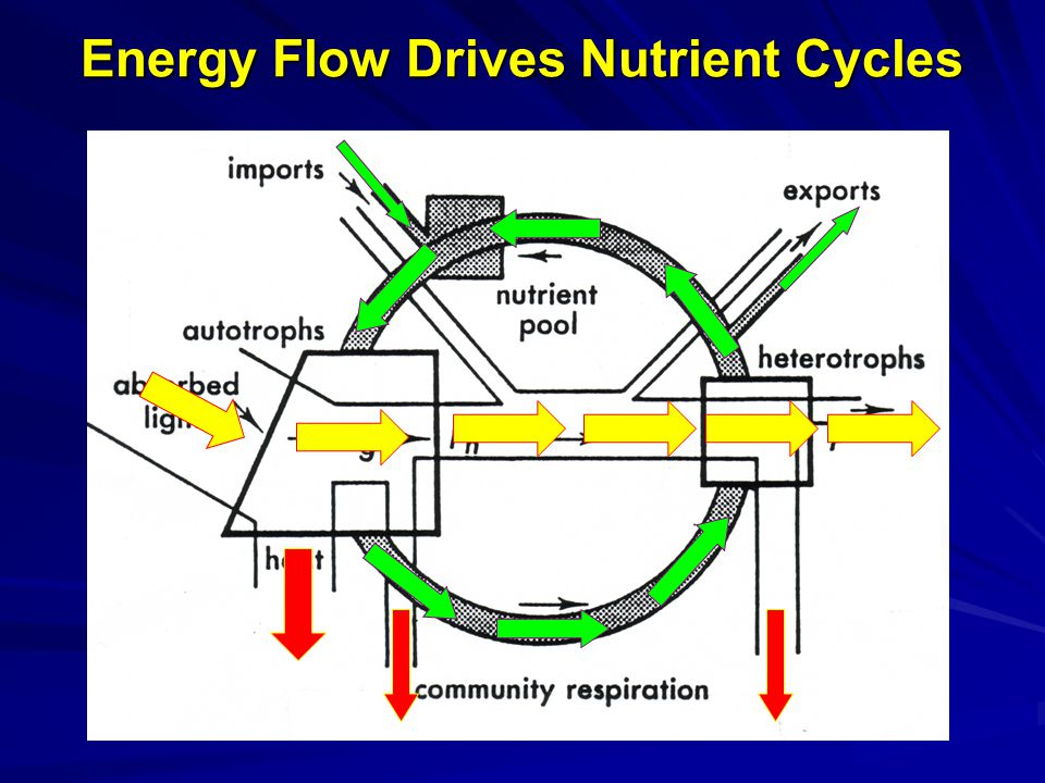 Energy Flow Drives Nutrient Cycles