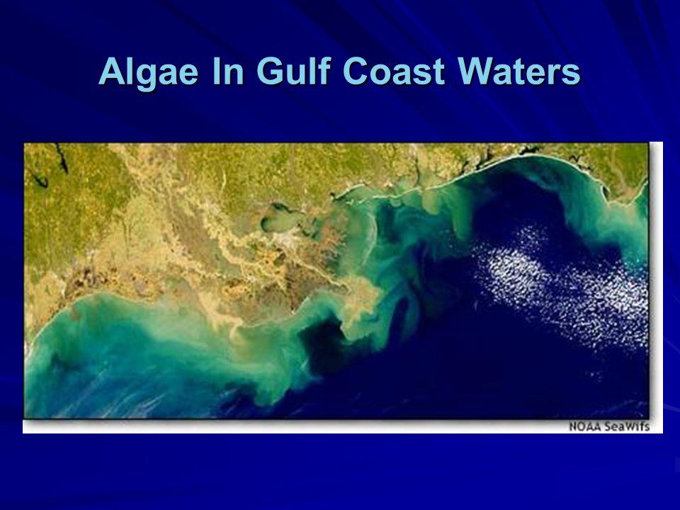 Algae In Gulf Coast Waters