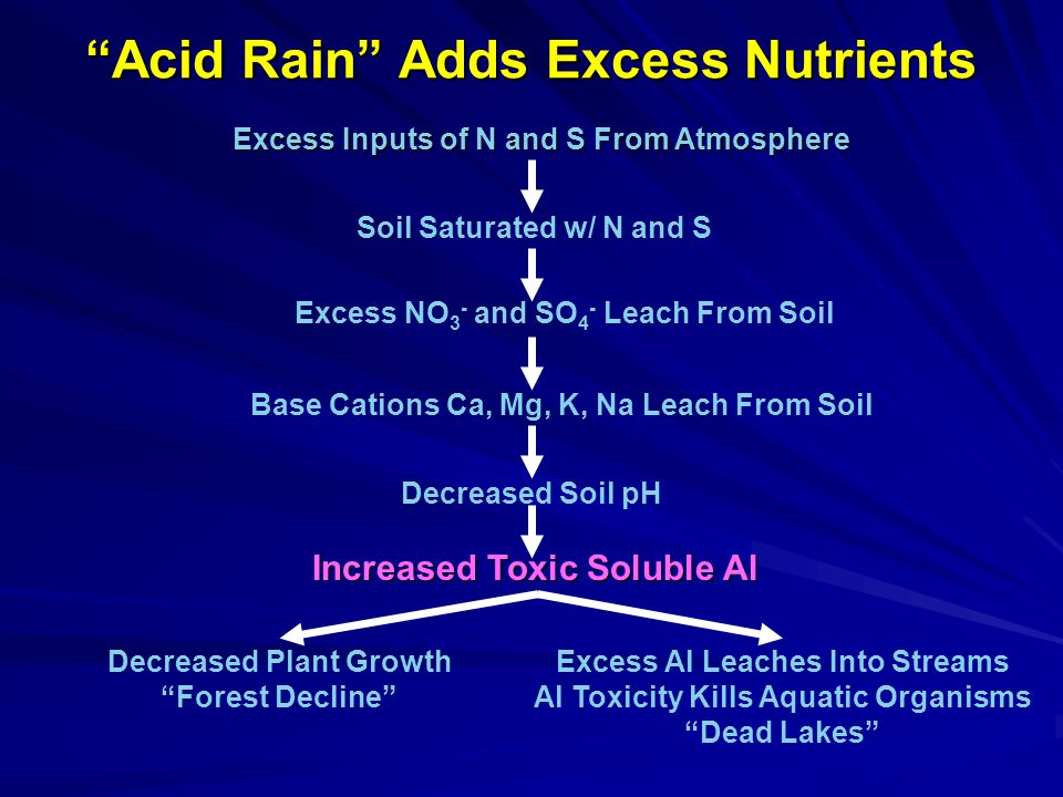 Acid Rain Adds Excess Nutrients Excess Inputs of N and S From Atmosphere Soil Saturated w/ N and S Excess NO 3 - and SO 4 - Leach From Soil Base Cations Ca, Mg, K, Na Leach From Soil Decreased Soil pH Increased Toxic Soluble Al Decreased Plant Growth Forest Decline Excess Al Leaches Into Streams Al Toxicity Kills Aquatic Organisms Dead Lakes