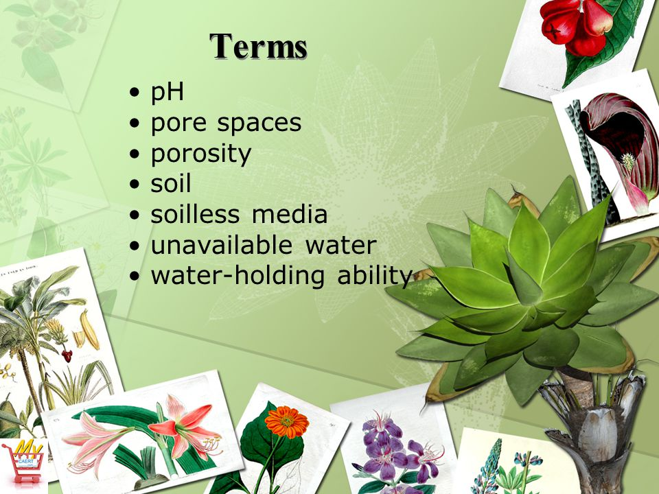 Terms pH pore spaces porosity soil soilless media unavailable water water-holding ability