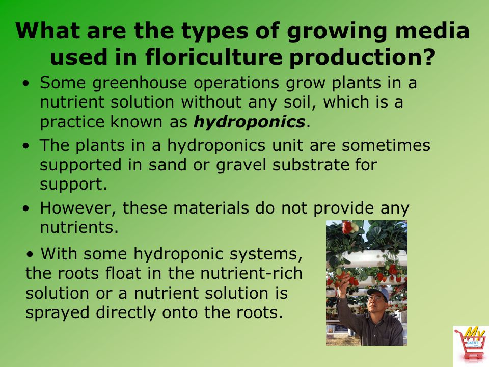 What are the types of growing media used in floriculture production.
