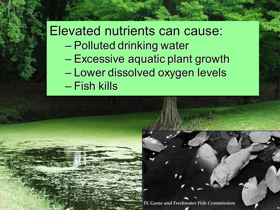 Elevated nutrients can cause: –Polluted drinking water –Excessive aquatic plant growth –Lower dissolved oxygen levels –Fish kills Elevated nutrients can cause: –Polluted drinking water –Excessive aquatic plant growth –Lower dissolved oxygen levels –Fish kills