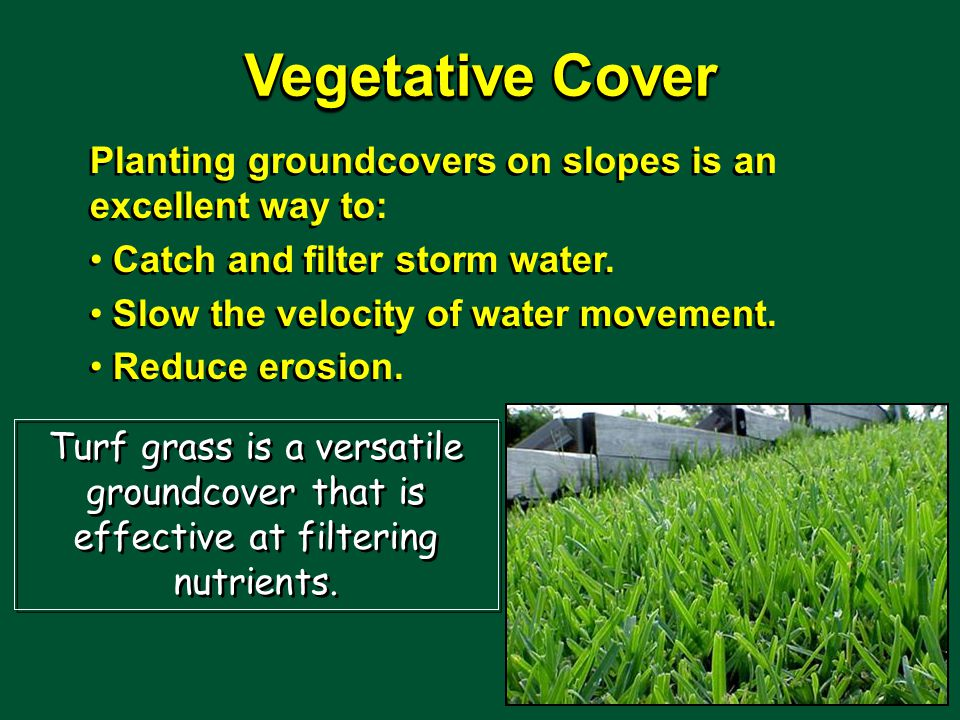 Vegetative Cover Planting groundcovers on slopes is an excellent way to: Catch and filter storm water.