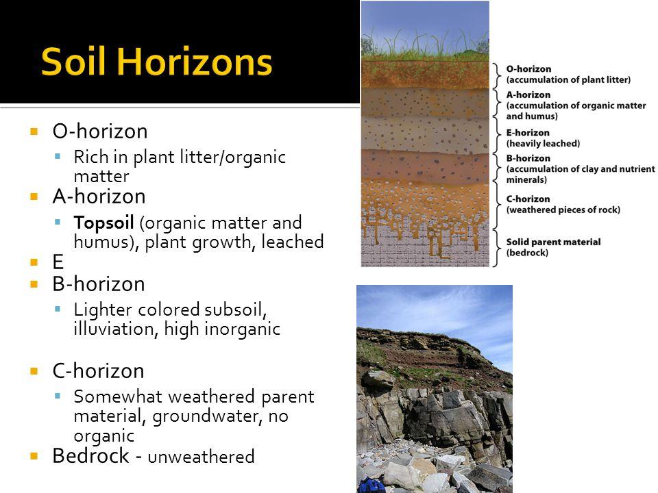  O-horizon  Rich in plant litter/organic matter  A-horizon  Topsoil (organic matter and humus), plant growth, leached EE  B-horizon  Lighter c