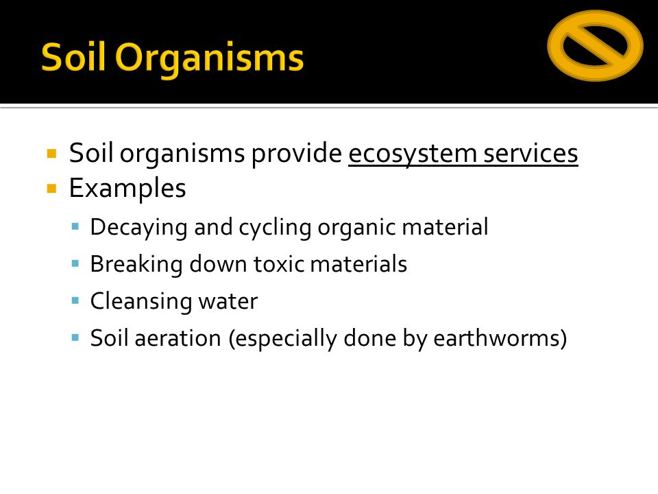  Soil organisms provide ecosystem services  Examples  Decaying and cycling organic material  Breaking down toxic materials  Cleansing water  Soi