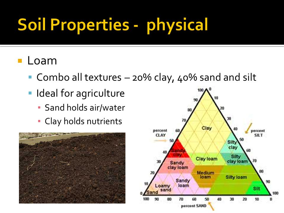  Loam  Combo all textures – 20% clay, 40% sand and silt  Ideal for agriculture ▪ Sand holds air/water ▪ Clay holds nutrients