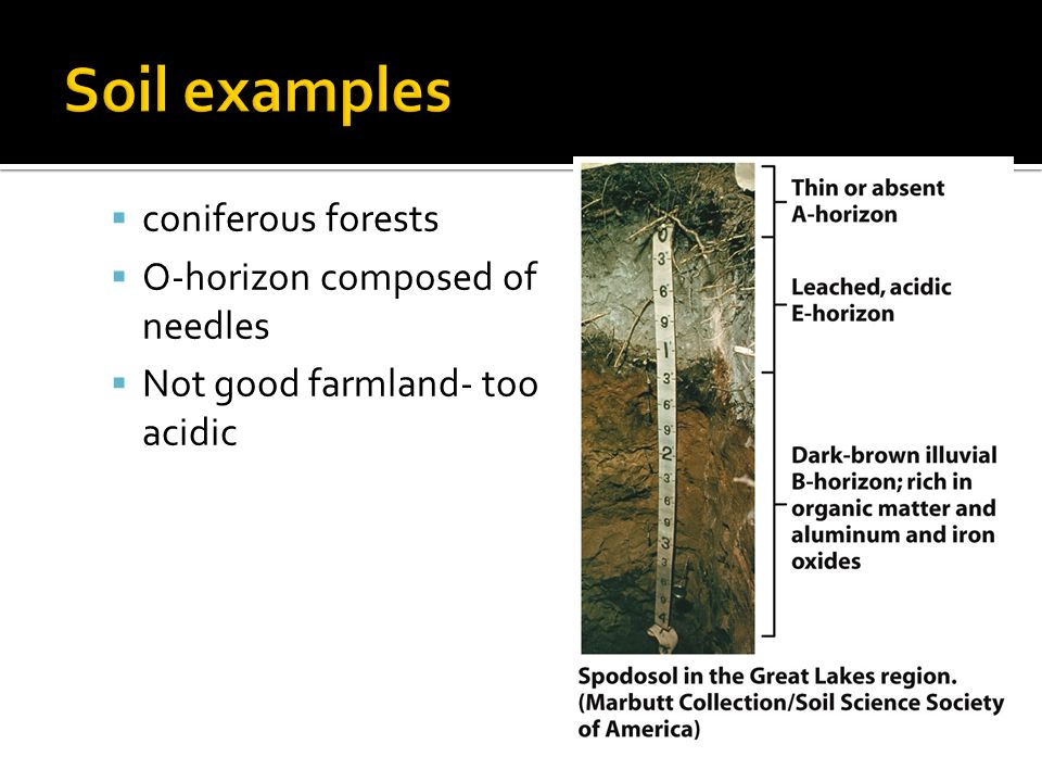  coniferous forests  O-horizon composed of needles  Not good farmland- too acidic
