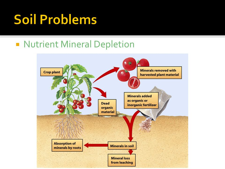  Nutrient Mineral Depletion
