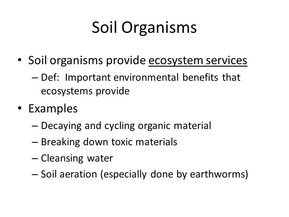 Soil Organisms Soil organisms provide ecosystem services – Def: Important environmental benefits that ecosystems provide Examples – Decaying and cycli